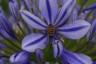 Salom Botanico (17)