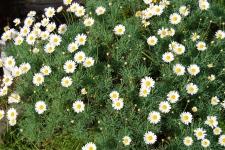 Salom Botanico (48)