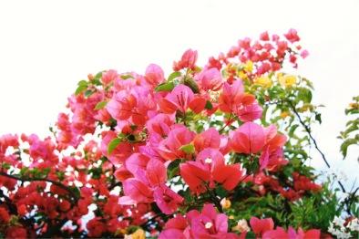 Salom Botanico (52)